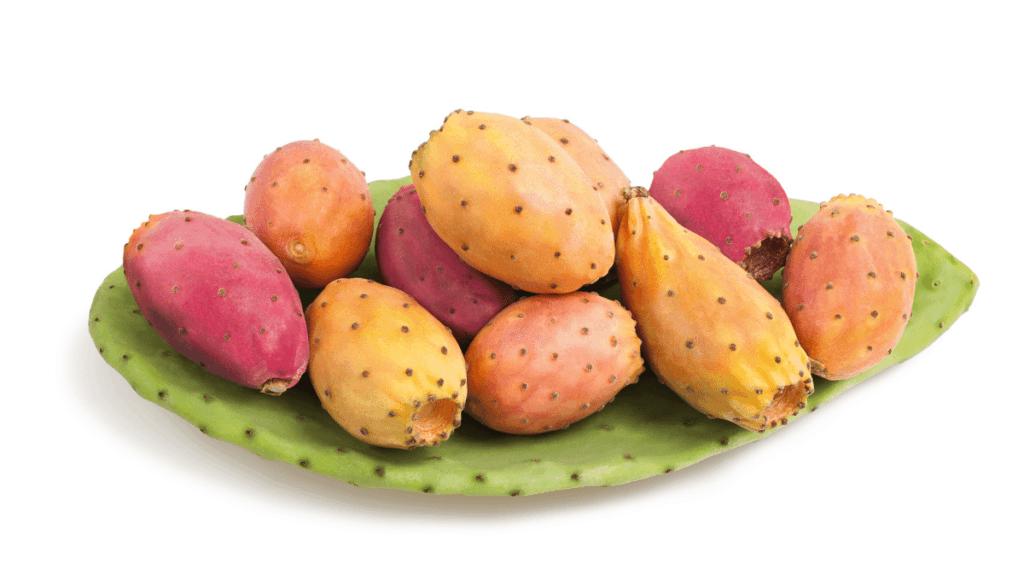 Kaktusfeige Aussehen und Herkunft
